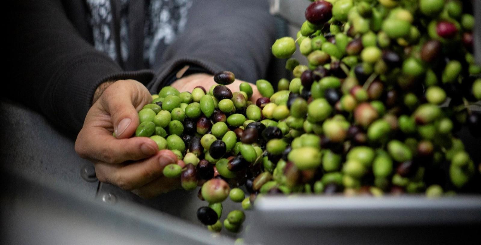 <p>Esporão to jeden z czołowych producentów wina na świecie, który stał się również jednym z najlepszych na świecie producentów portugalskiej oliwy. Marzenia się spełniają.</p>