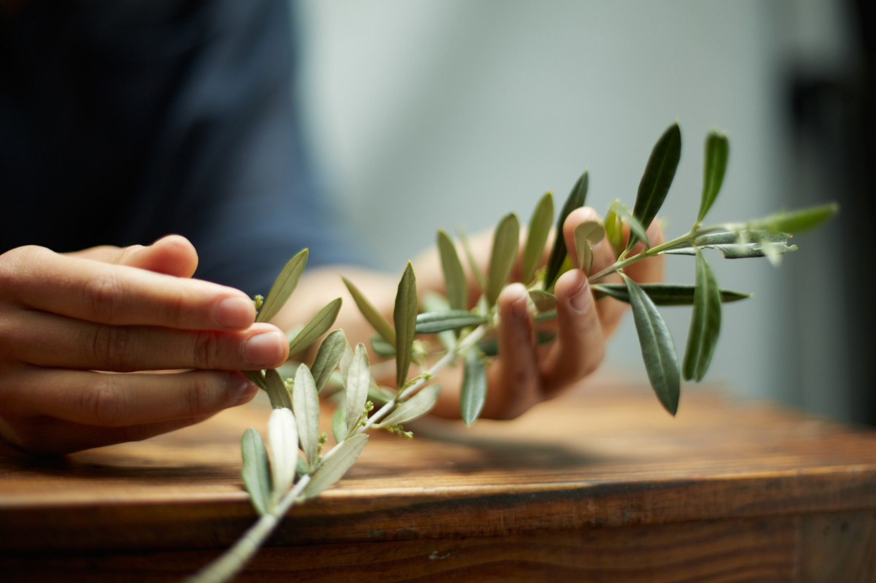 Odkryj oliwne sekrety